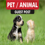 do PET blog guest post