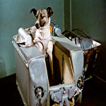 Three Famous Dogs In History